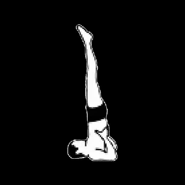 asana - shoulderstand